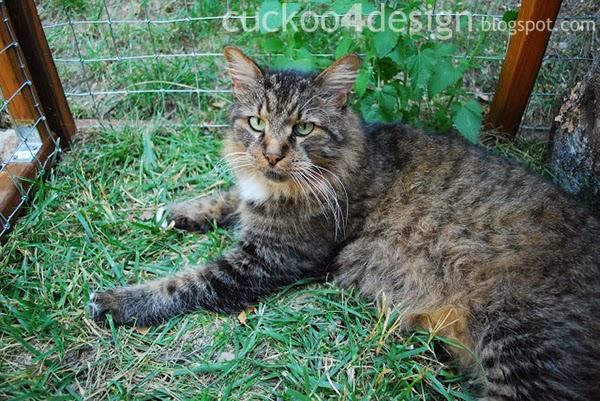DIY outdoor cat enclosure