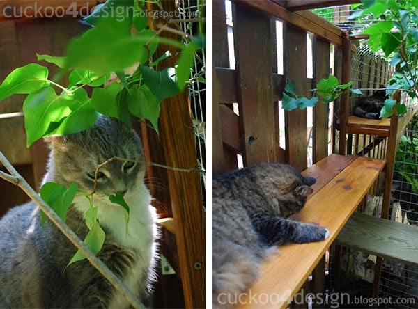 cat enjoying outdoor cat enclosures