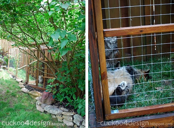 Easy Diy Cat Enclosure Cuckoo4design