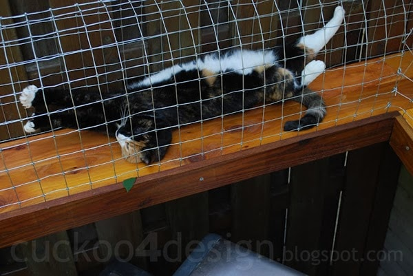 Rescue Dog Garden Fence