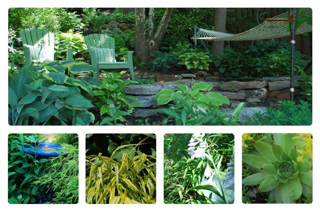 cuckoo 4 our garden, Hostas, Grasses