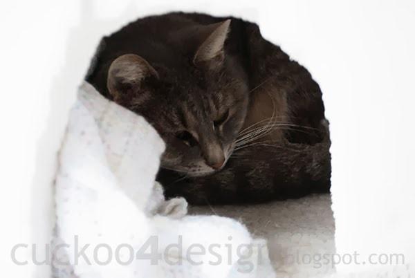 DIY heated igloo for outdoor cats