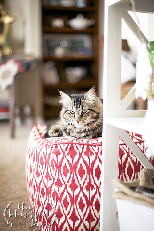 living pretty with your pets: meet the bloggers that do