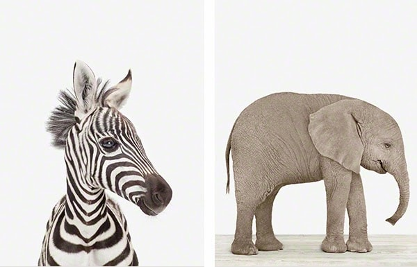 images via the animal print shop please pin from their site