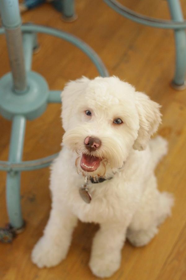 deaf rescue dog