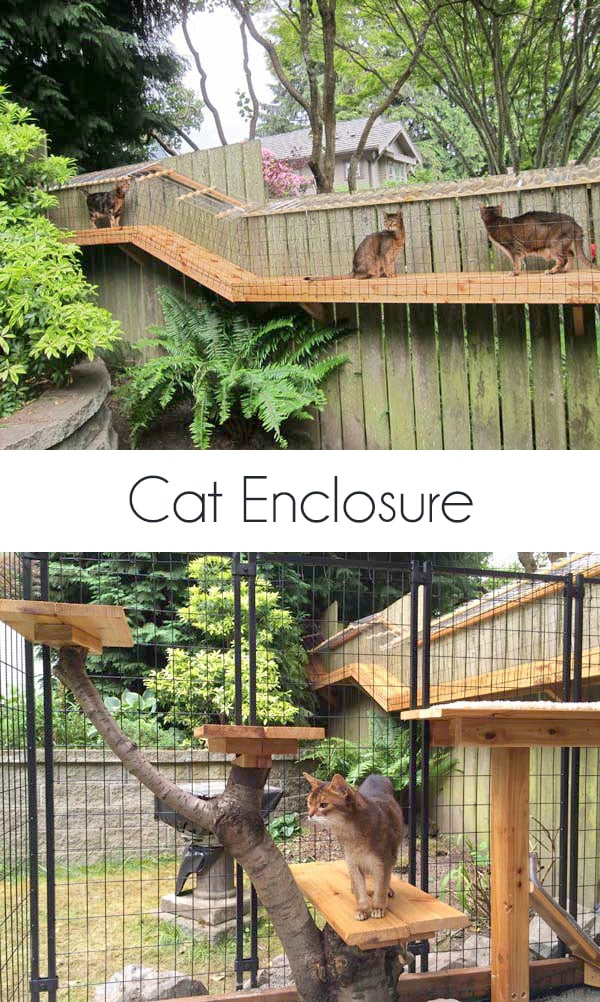 awesome big custom cat enclosure with tunnels, plexiglass glass roofs and large enclosure