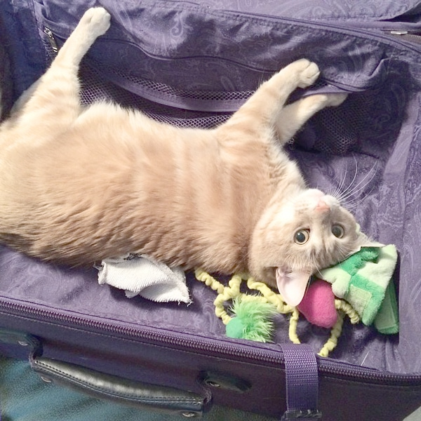 charlie suitcase