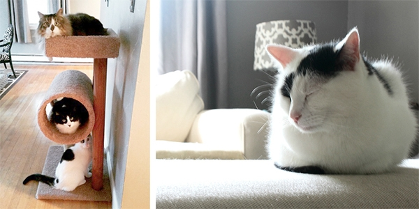 Living Pretty With Your Pets: Living Pretty With Your Pets: Sandpaper and Glue