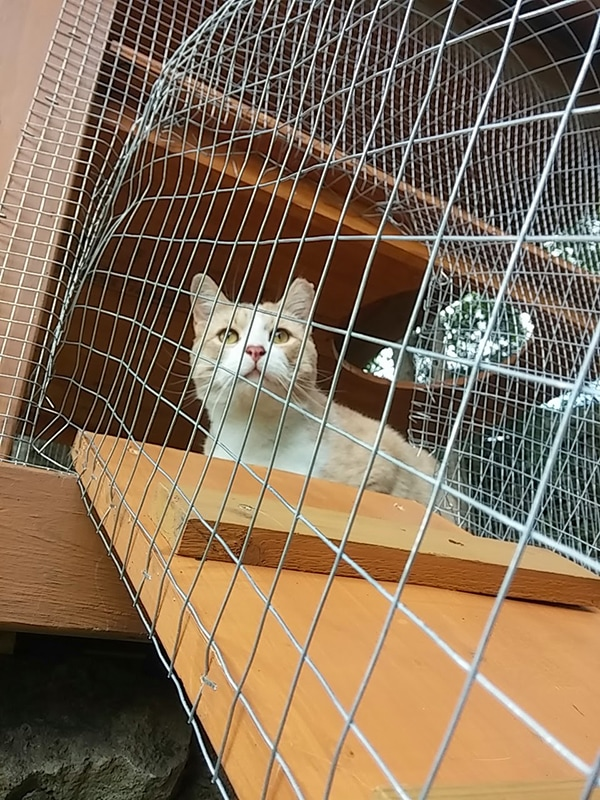 outdoor DIY cat enclosure