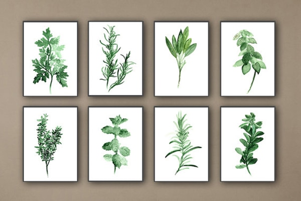 Botanical/herbs prints