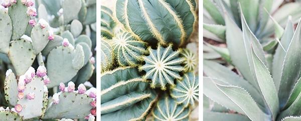 cactus art on etsy