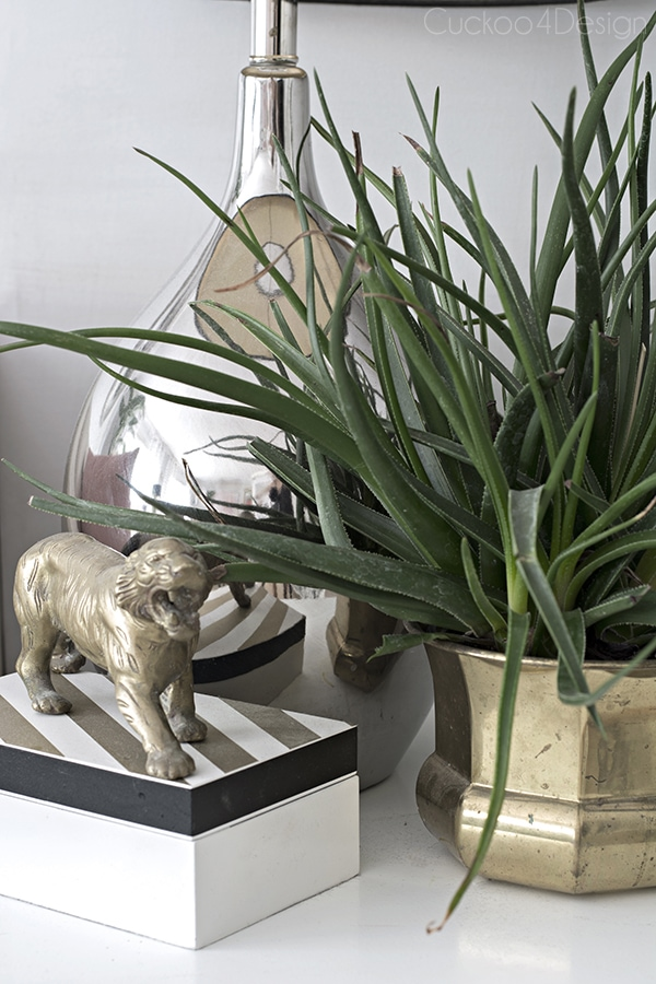 aloe hybrid plant