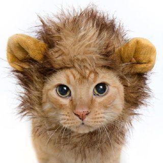 cat in a lion costume