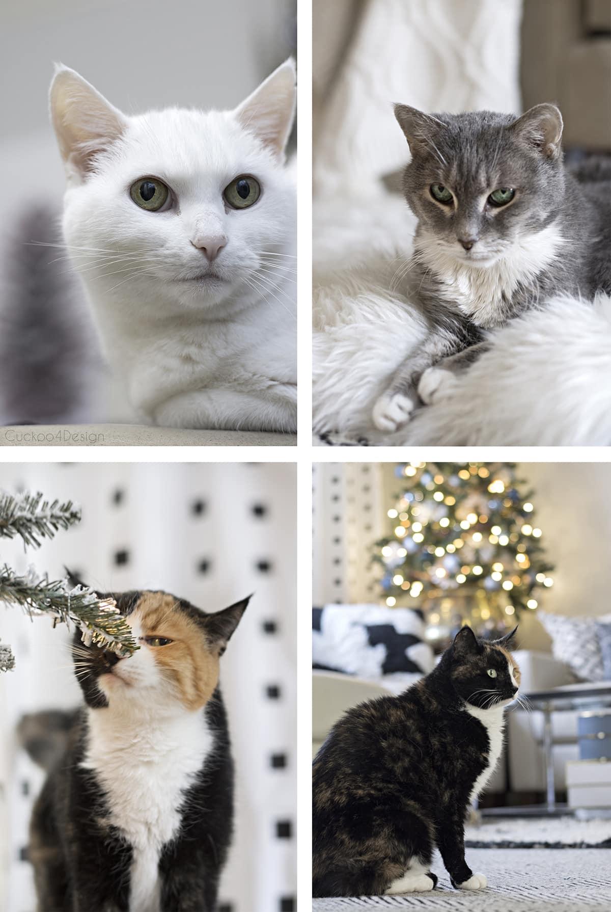 Christmas kitties