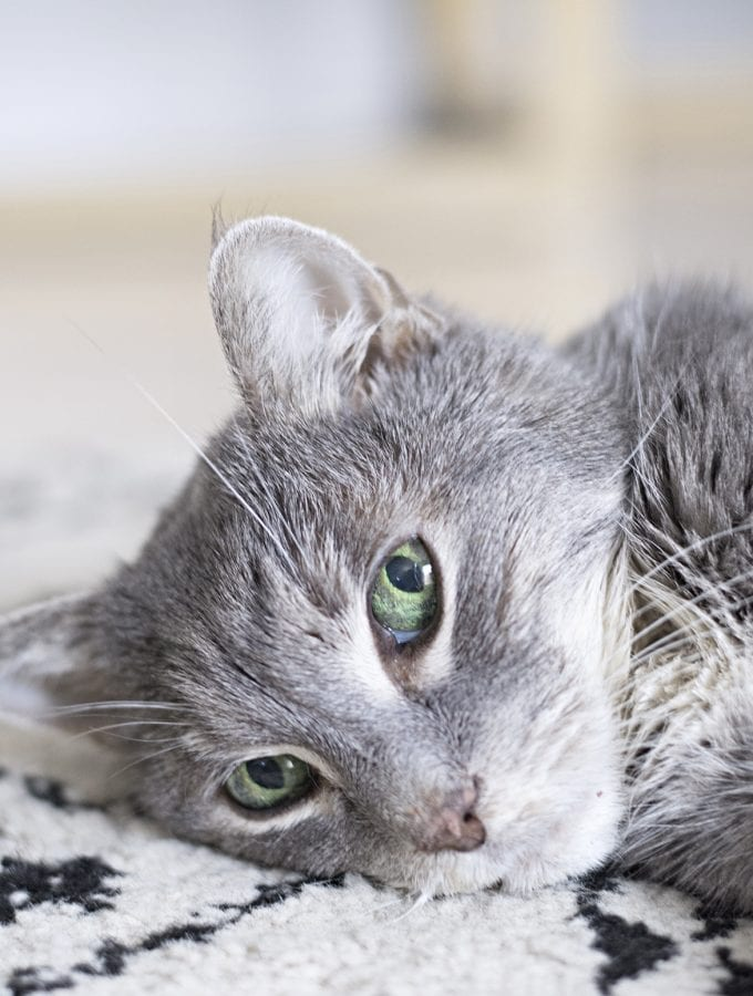Tips for caring and cleaning after elderly pets