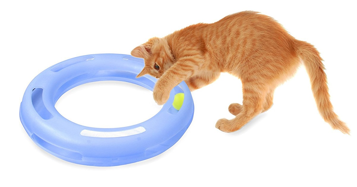 Crazy Circle Interactive cat toy