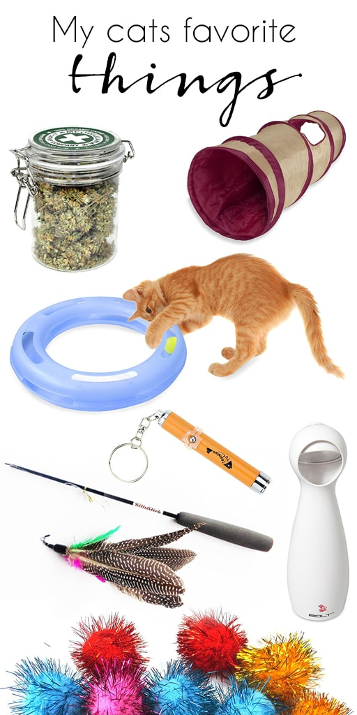 some of the best things that keep my cats occupied and happy at home with more on the blog