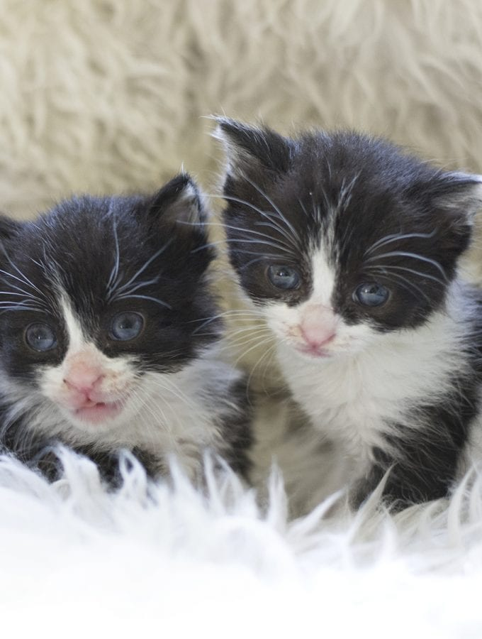 What I've learned from caring for kittens