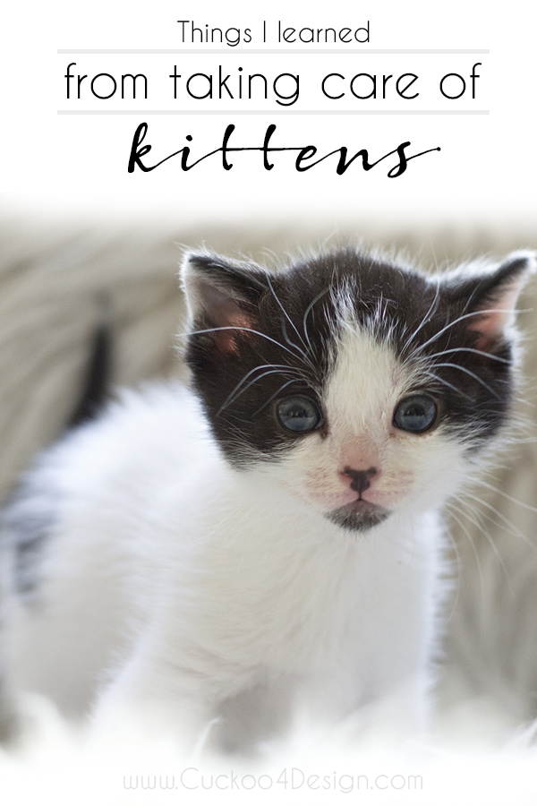 Things I have learned from taking care of kittens (bottle feeding and general care)