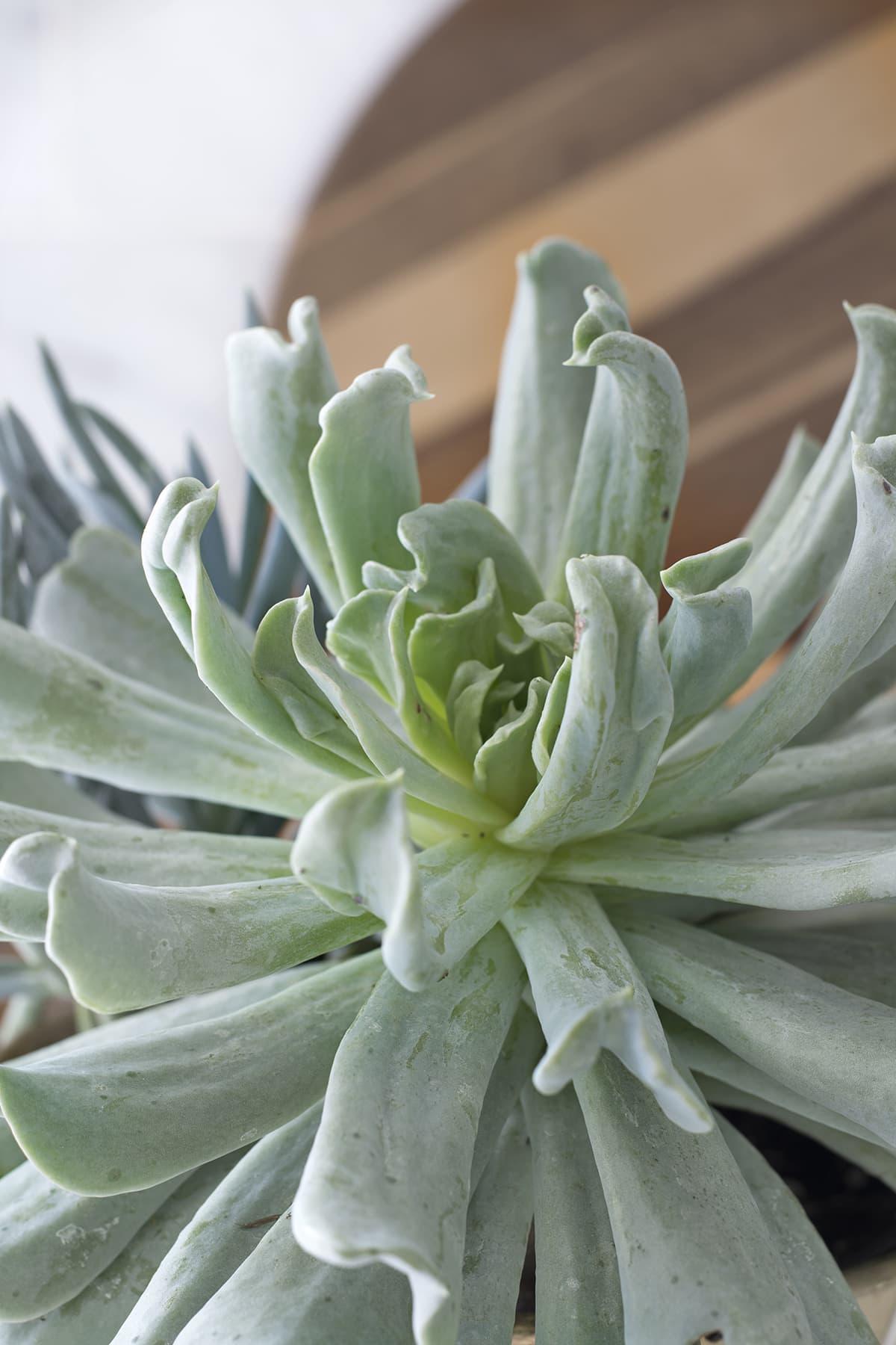 Succulent arrangement idea with different colors and textures