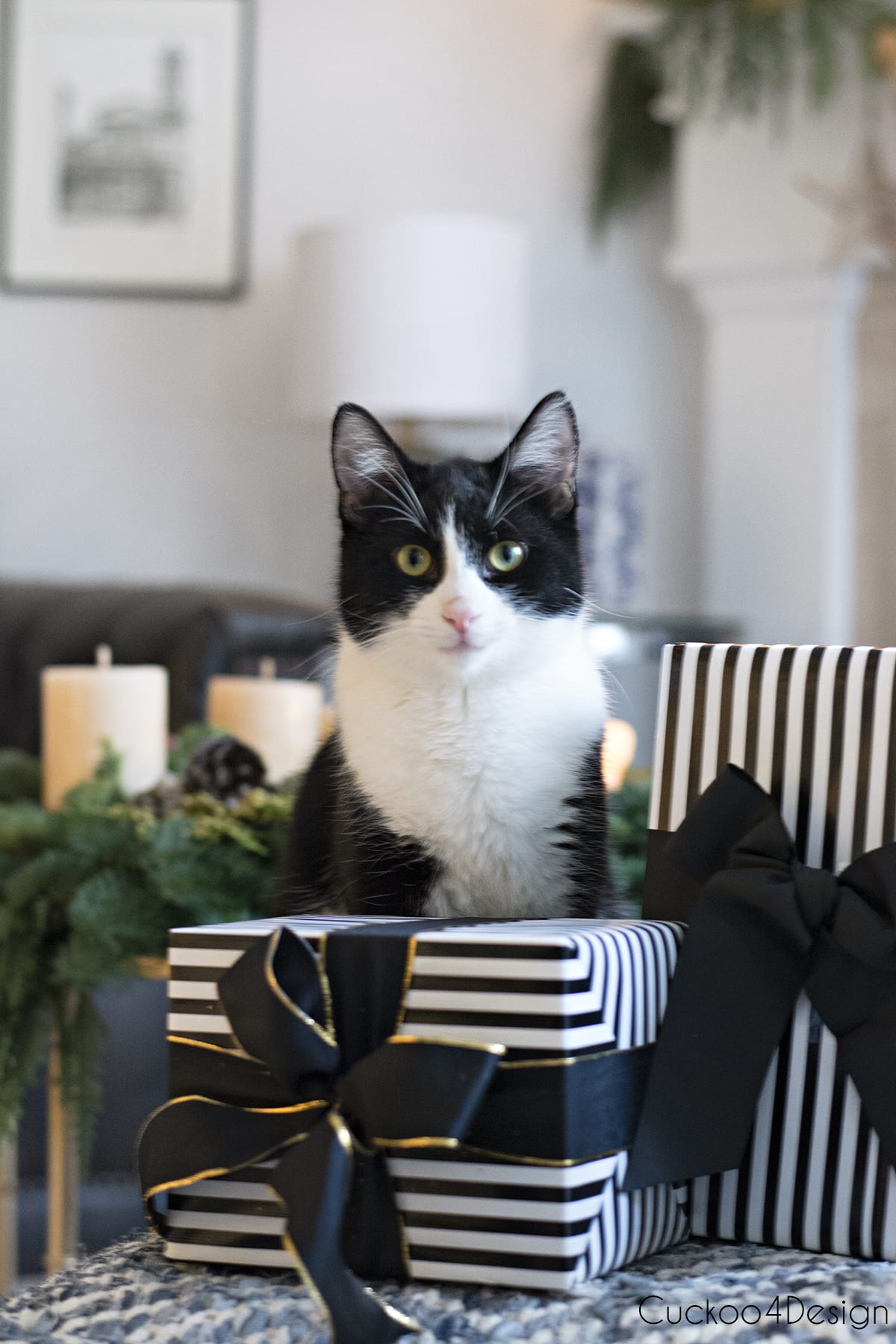 our tuxedo kitty posing with presents